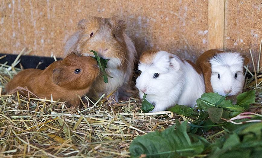 Tierheim Straubing | Hunde, Katzen, Vögel und Kleintiere suchen ein ...