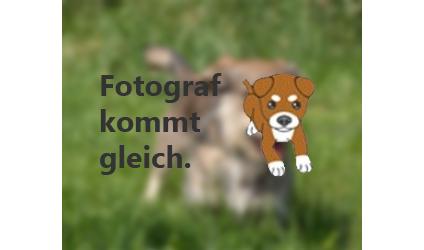 Tierheim Straubing Meerschweinchen 2014 | Search Results | Calendar ...